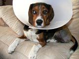 Dog+Suffering