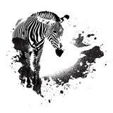 Grungy+Zebra