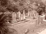 Spooky+Cemetery